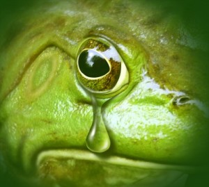 Frog with Tear